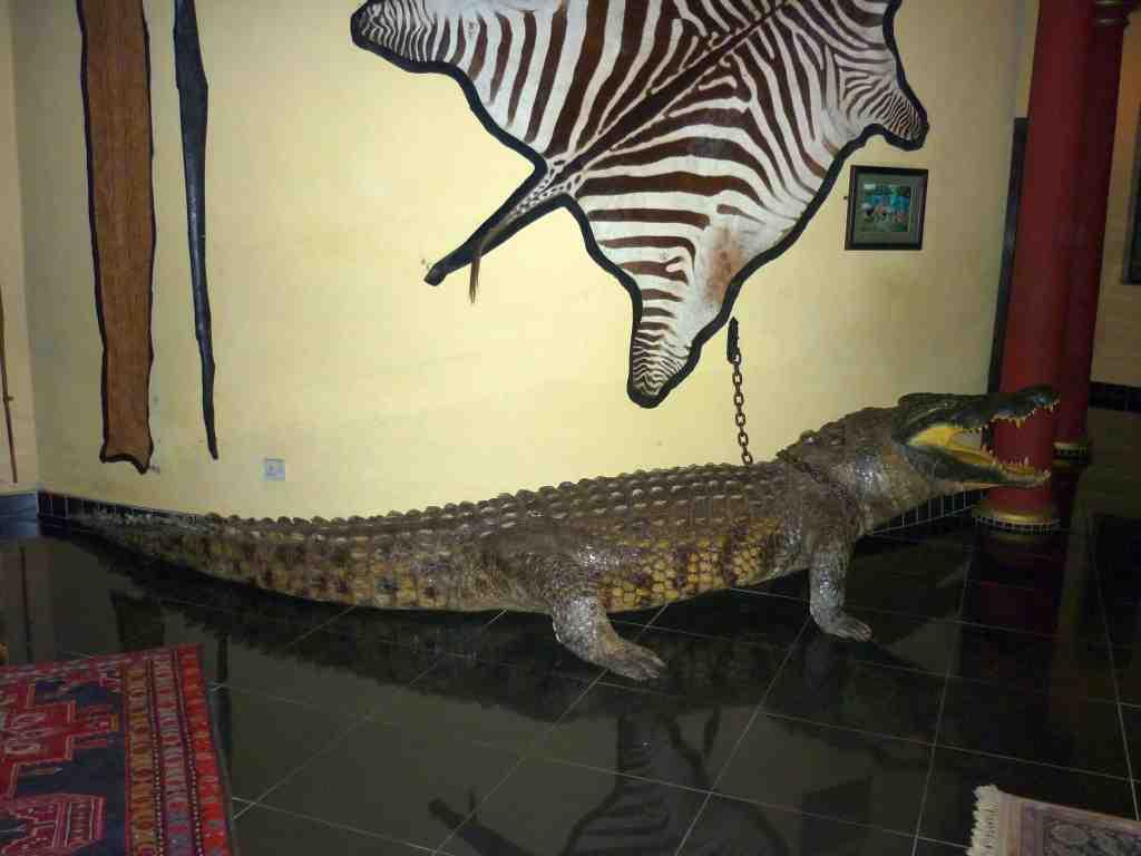 Nesbitt Castle Trophy Room Crocodile