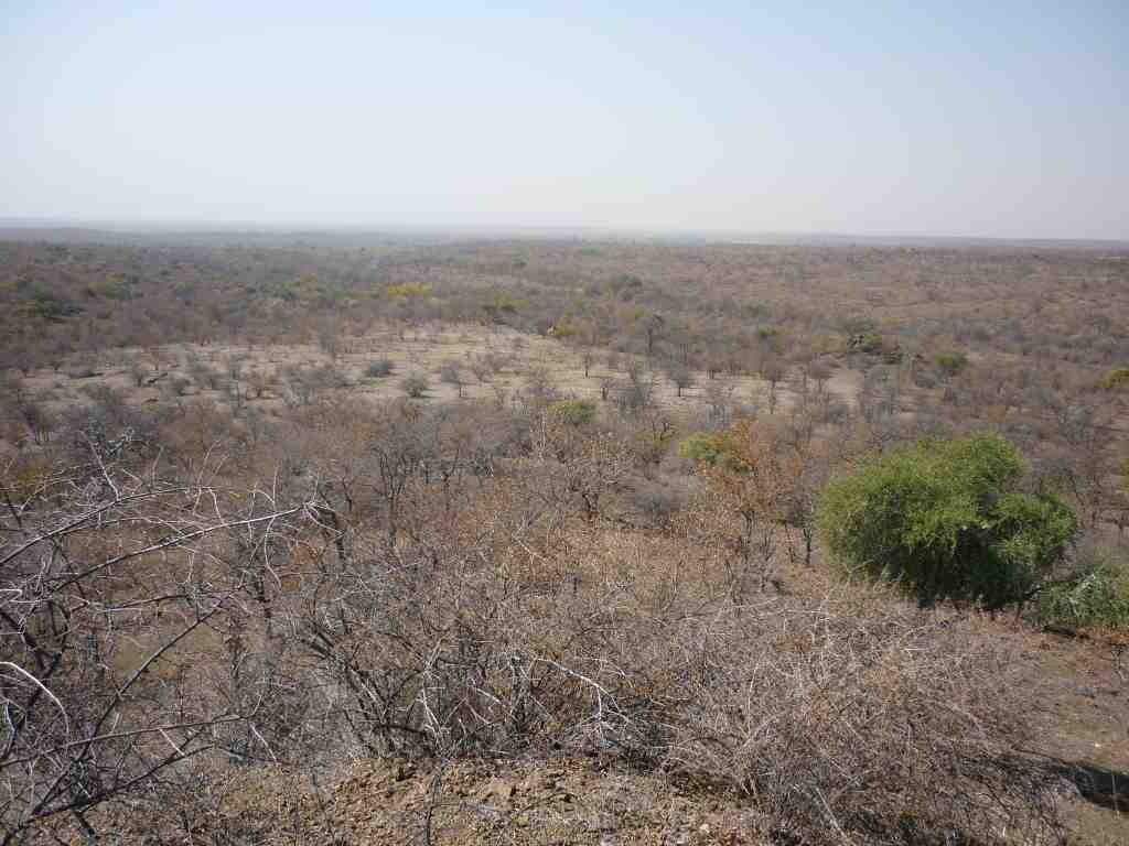 Tuli Circle Shashi Safari Area Giraffe