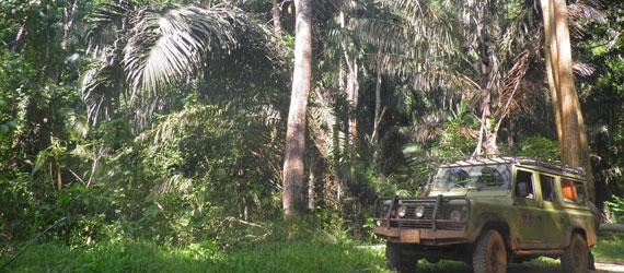 Usambara-Forests