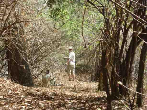 Pitta forest