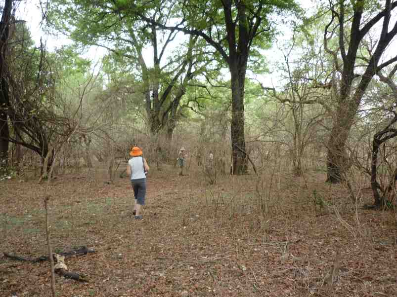 Pitta Habitat
