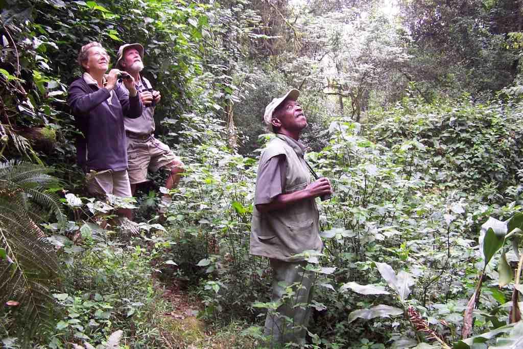 Swynnerton Robin habitat