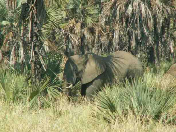 Elephant too .....