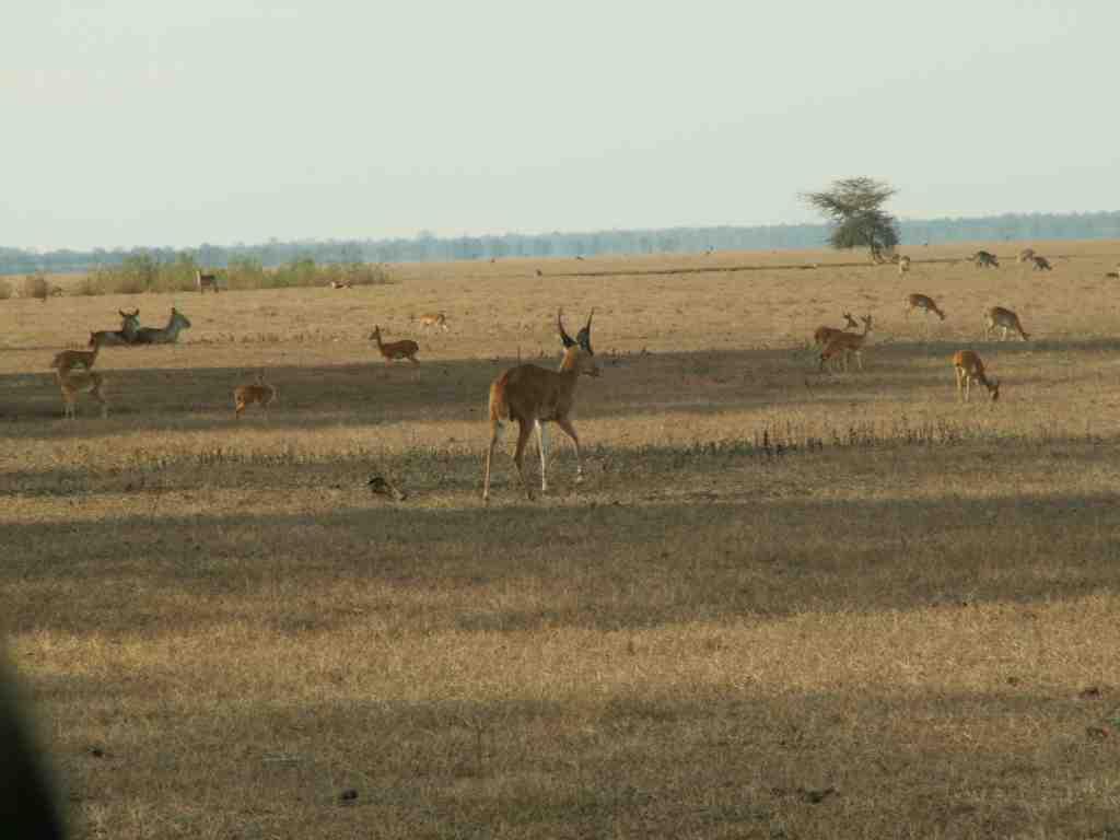 The Gorongosa flood plain