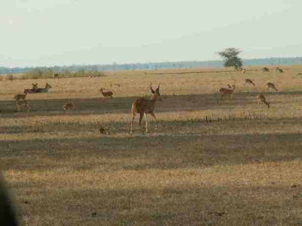 The Gorongosa flood plain