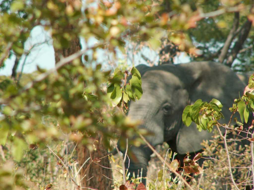 Kazuma Elephant